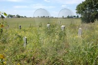 Grinstead and Overby tombstones in Denson cemetery before weed whacking